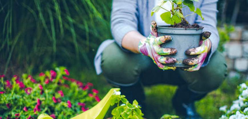 Como cultivar plantas pode ajudar sua saúde Clube do Diabetes